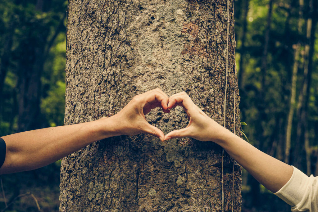 Soler - Bois - Nature - Ecoresponsable