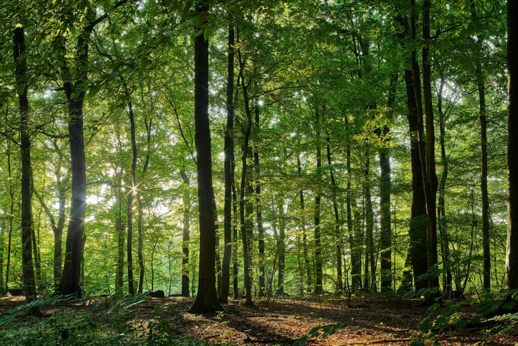 Soler - Charbon de bois - Forêt française