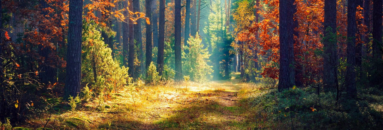 Soler - Nous rejoindre - Production - Forêts