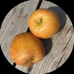 Soler - Recette - Barbecue - Pommes